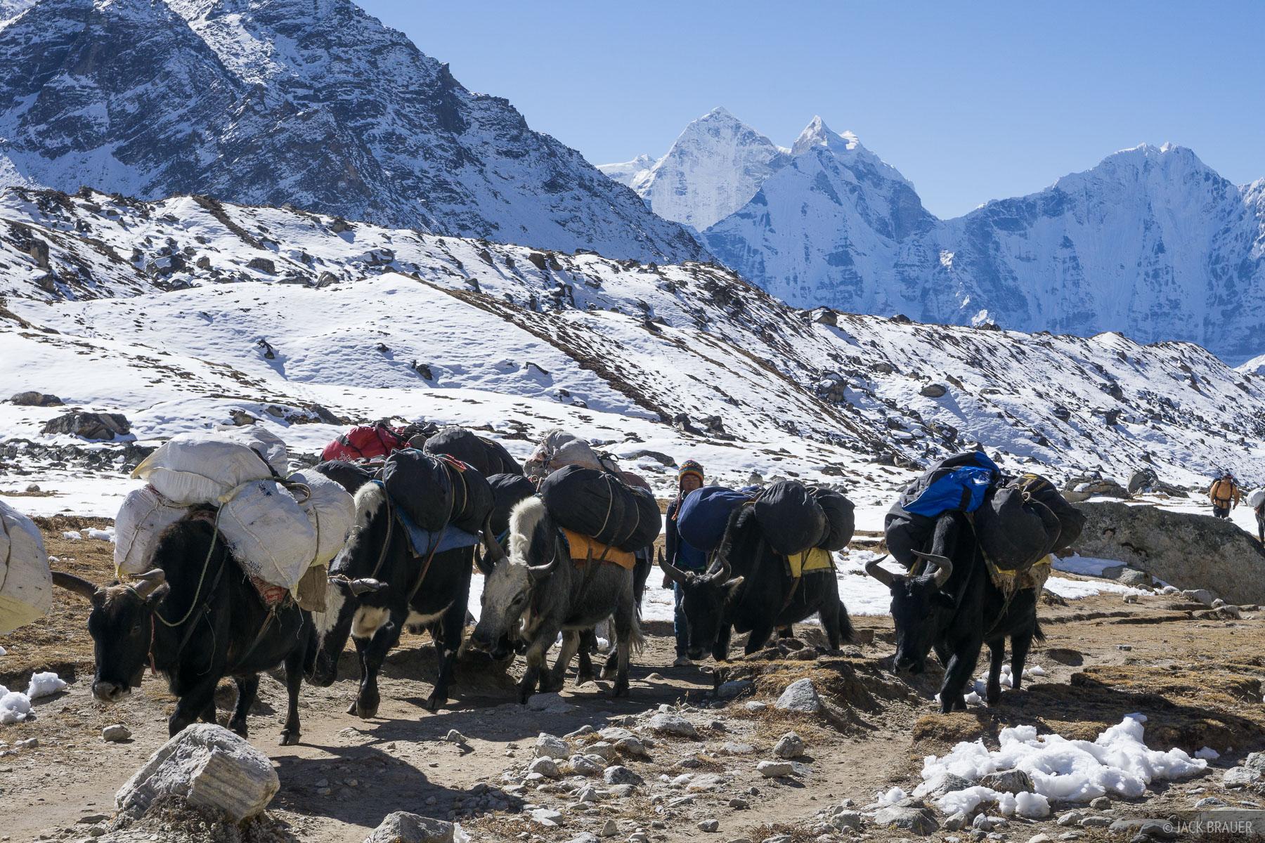 Himalaya,Khumbu,Nepal,yak, photo