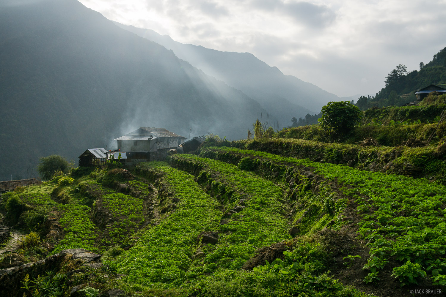 A farmer's terraces in Chomrong. Many houses in Nepal don't use proper stove pipes, so smoke from the stoves just seeps out...