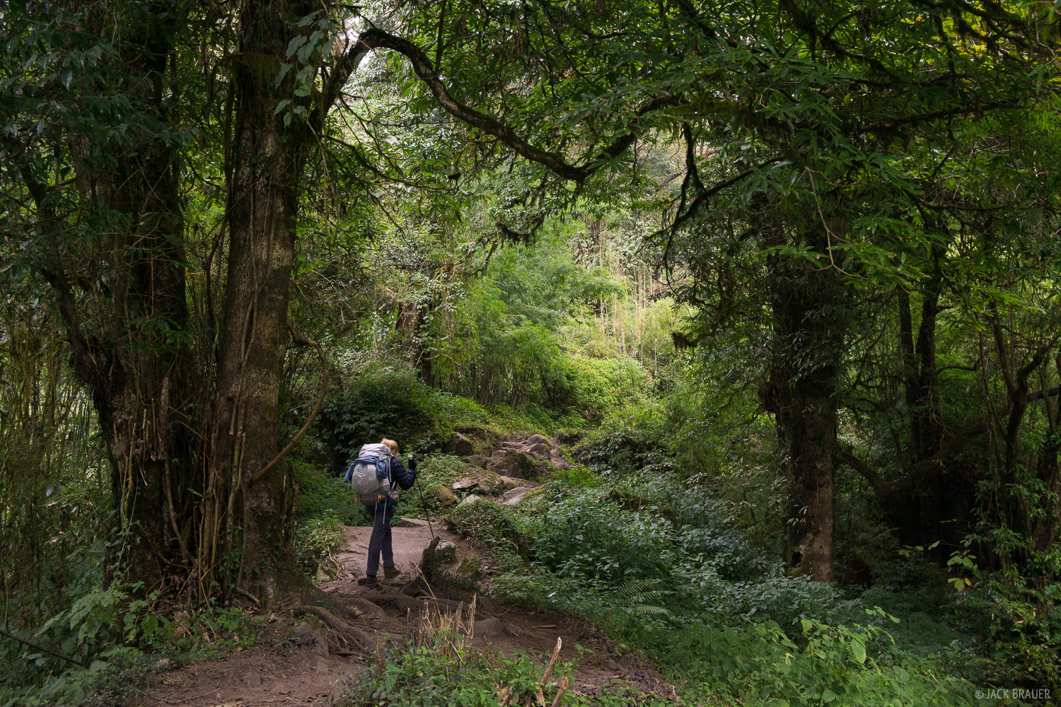 The Modi Khola gorge is filled with lush jungle forest, complete with vines, moss, and monkeys.