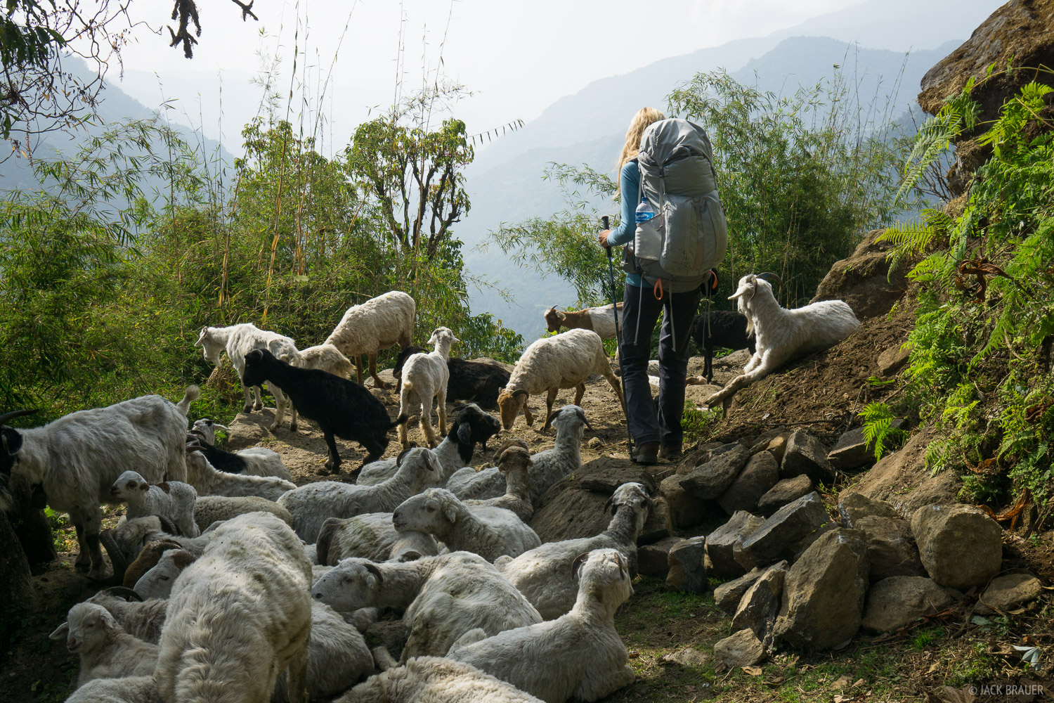 Annapurna Range, Himalaya, Nepal, sheep, hiking, photo