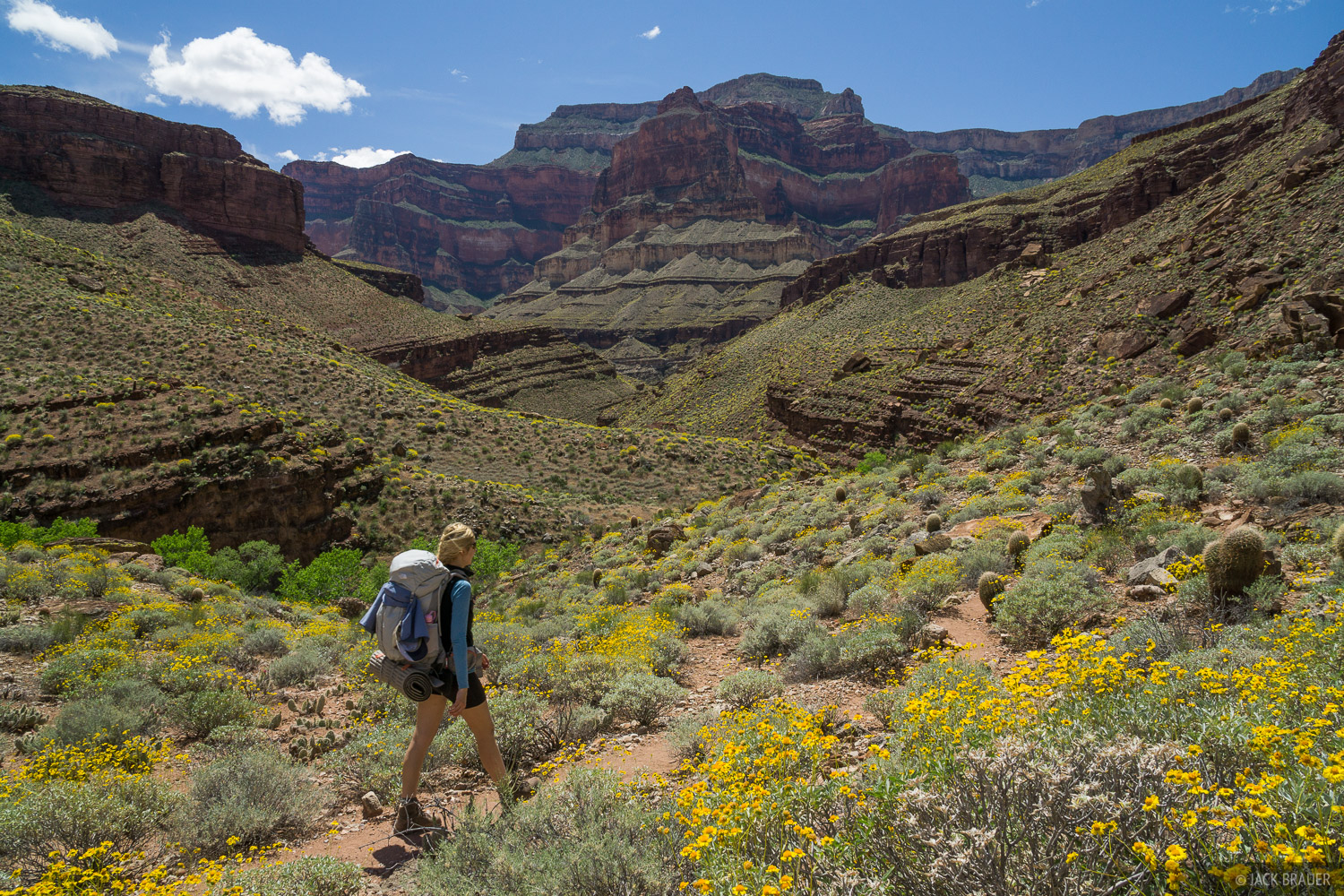 Arizona, Grand Canyon, wildflowers, hiking, photo