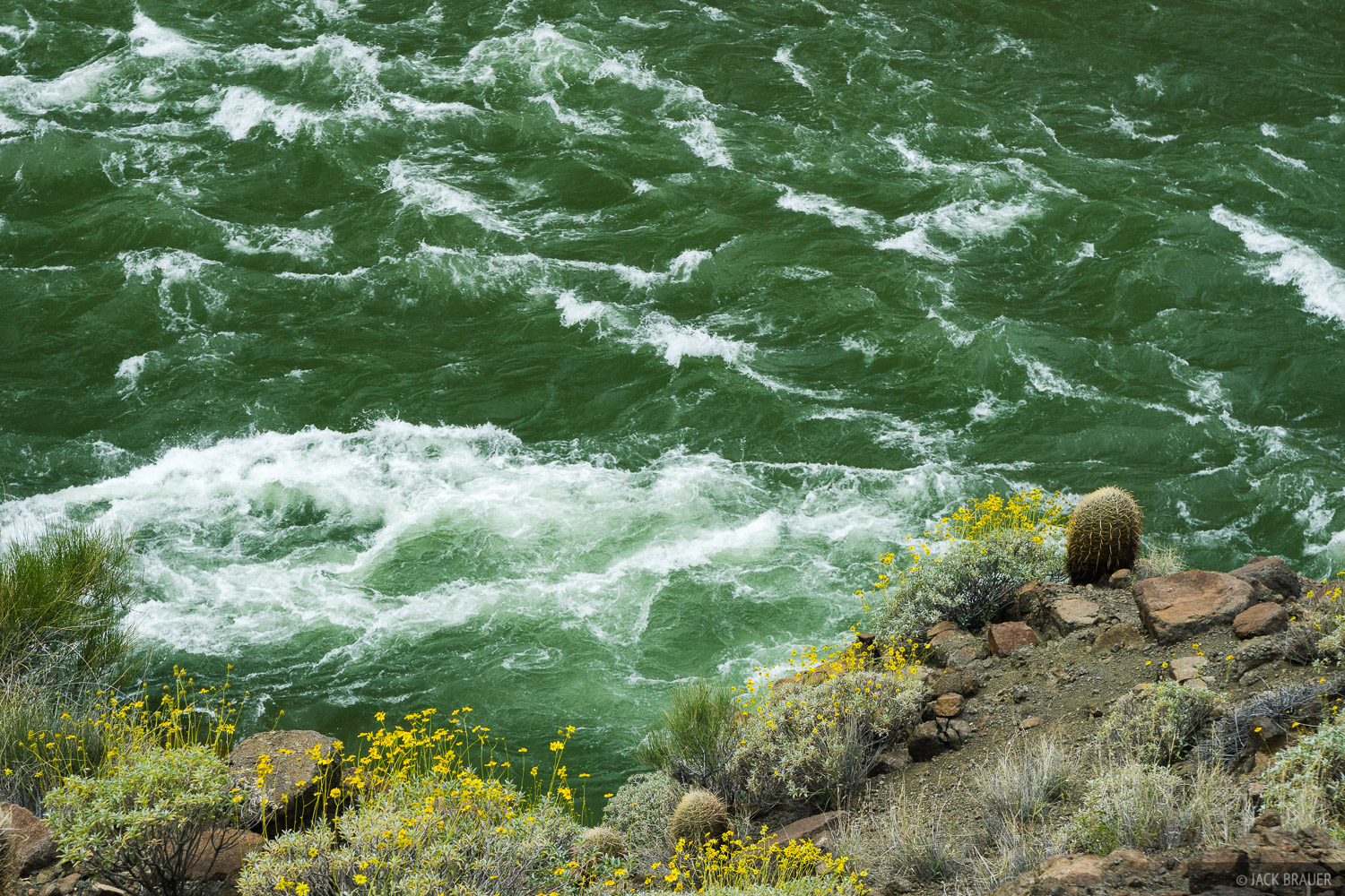 The mighty Colorado River. The river's water should be an orangish brown color; however the Glen Canyon Dam upstream collects...