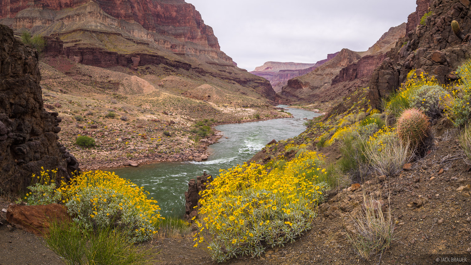 Arizona,Colorado River,Grand Canyon,wildflowers, photo