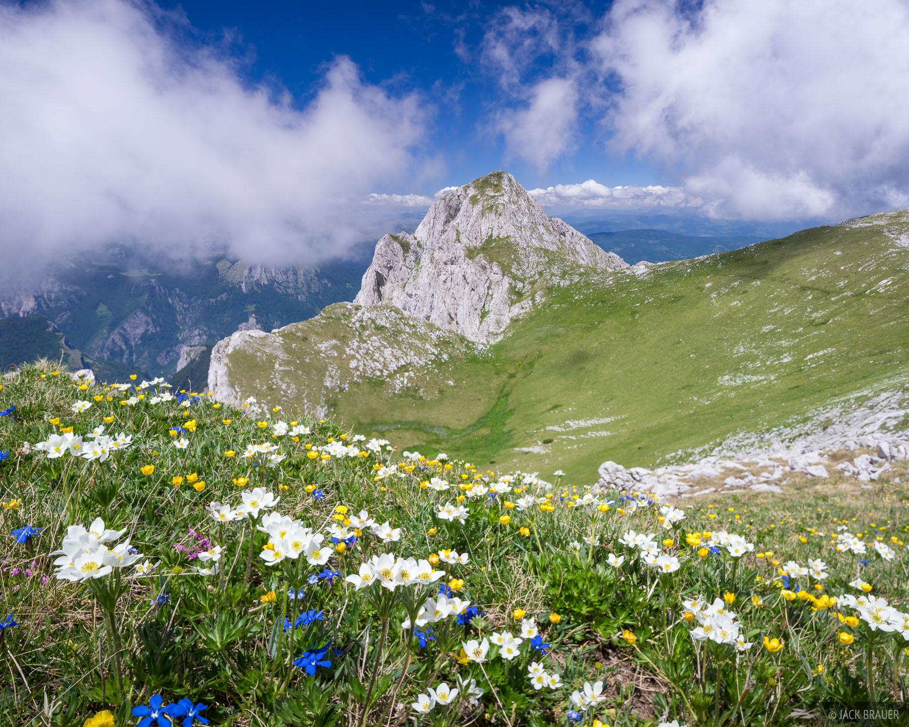 Magli?, Bosnia, Dinaric Alps, Montenegro, wildflowers, Maglic