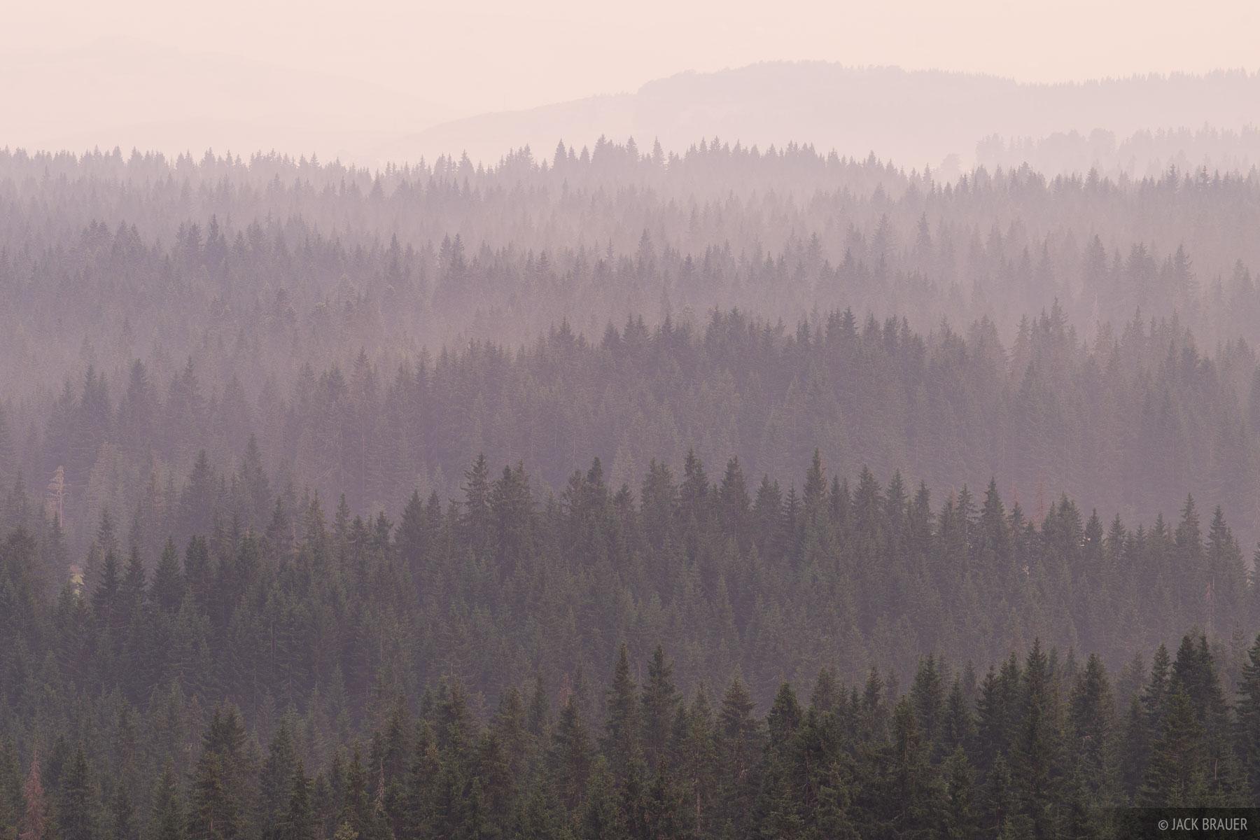 Rainy forests near Zabljak.