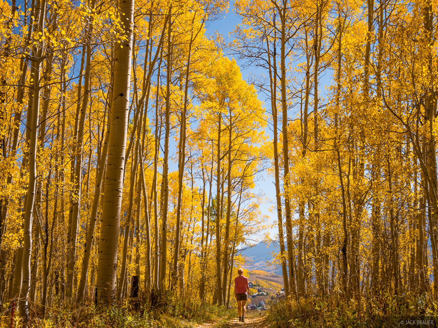 Colorado,Crested Butte,aspens, hiking, photo