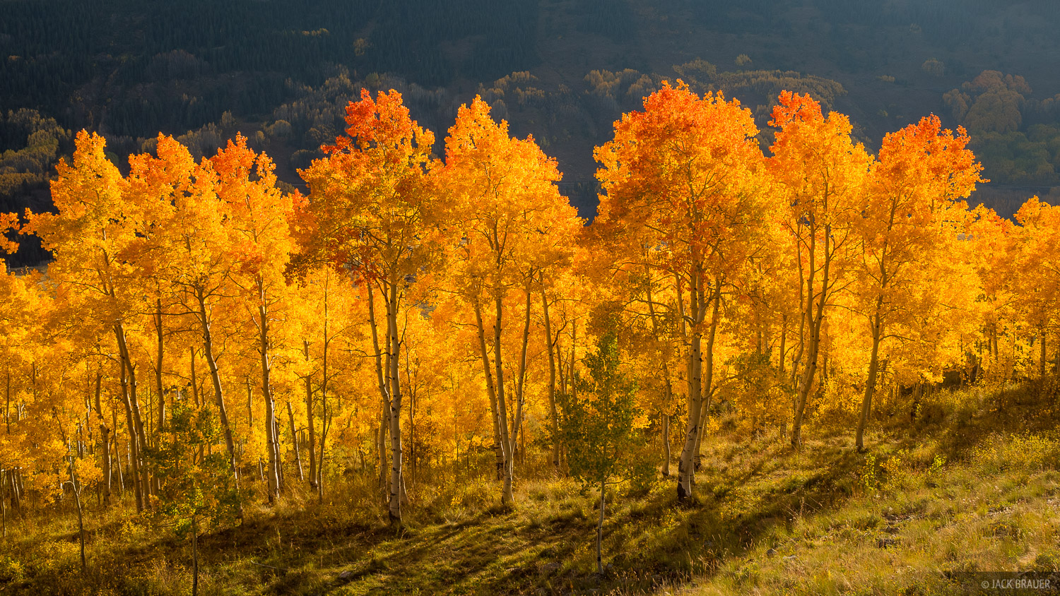 Colorado,Crested Butte,aspens, September, photo