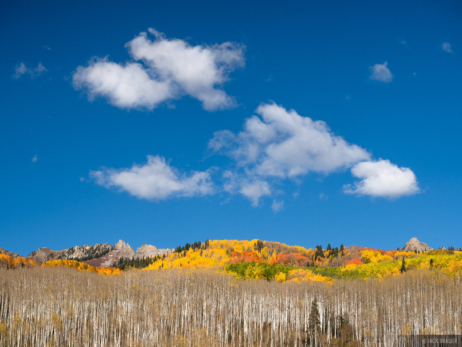 Colorful aspens and a blue sky at Kebler Pass.