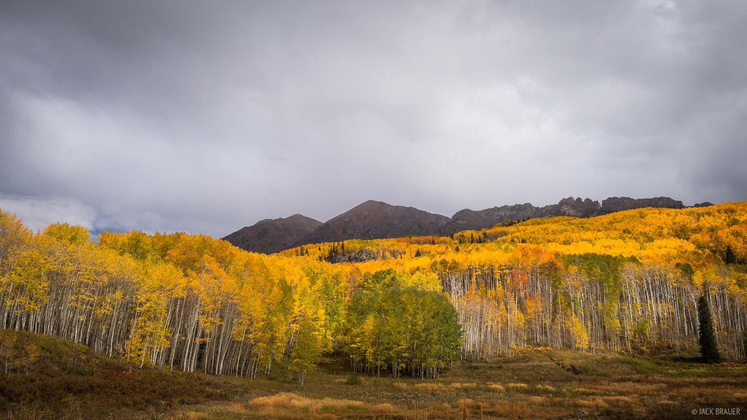 Rainy weather and colorful aspens near Kebler Pass - October.
