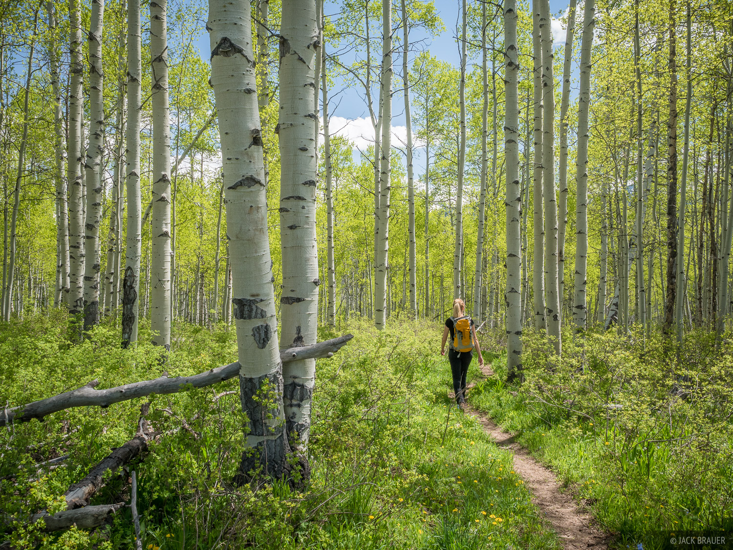 Colorado, West Elk Mountains, Kebler Pass, aspens, hiking, spring, June