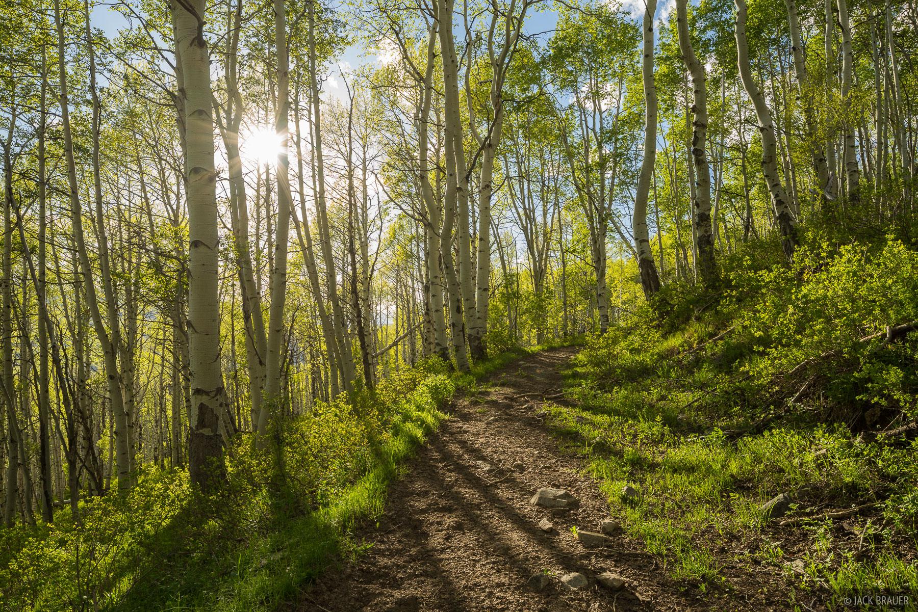 Colorado, Elk Mountains, Kebler Pass, aspens, trail, Ruby Range, June, photo