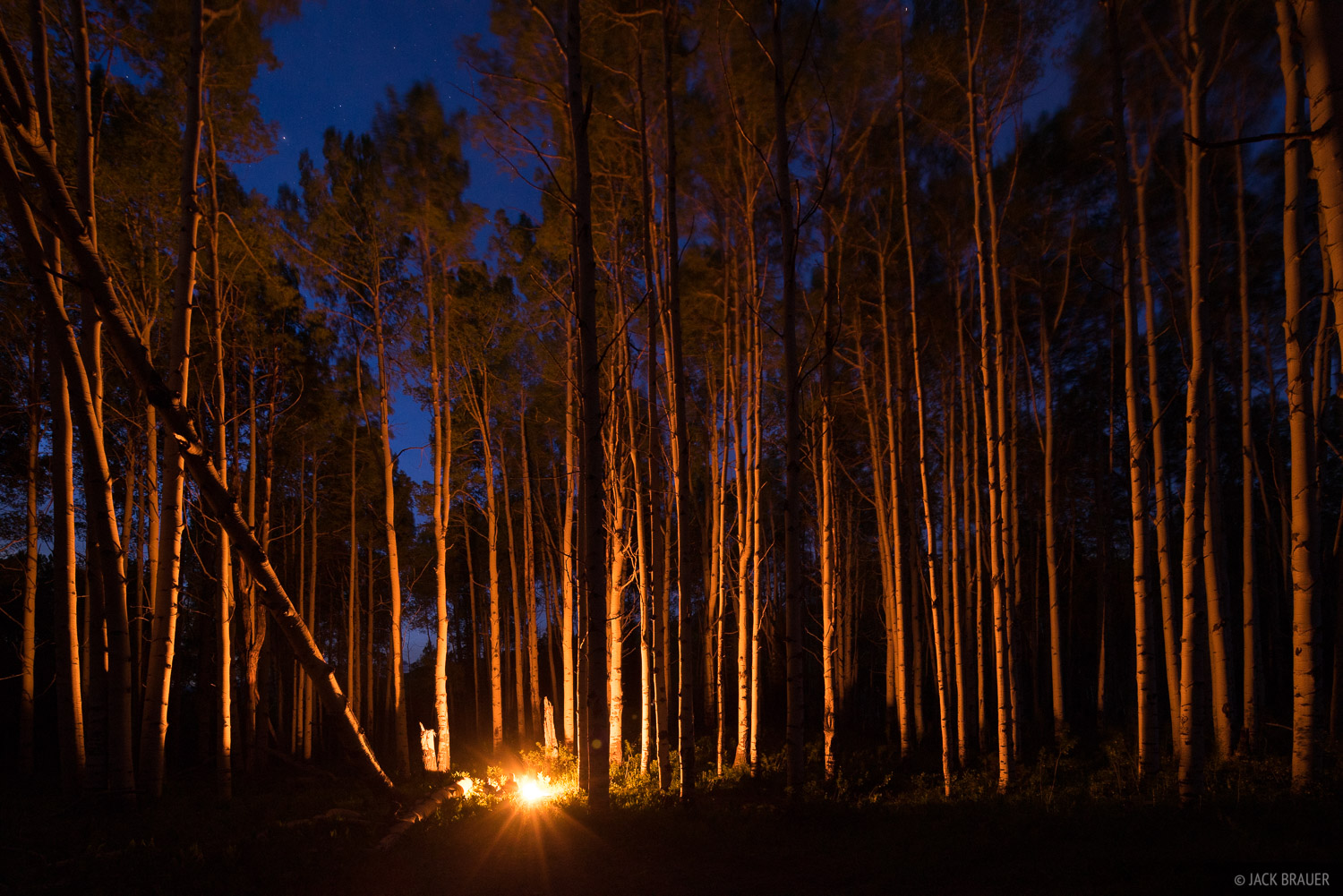 Campfire in the aspens up by Kebler Pass, near Crested Butte, Colorado.