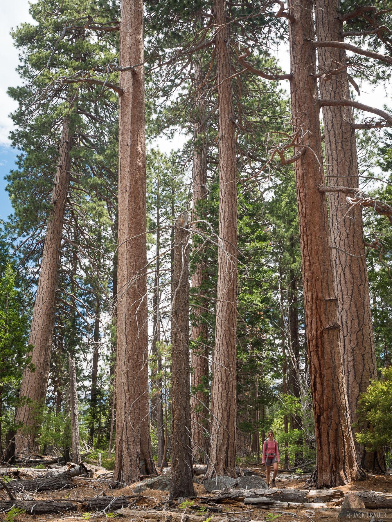 California, Lake Tahoe, Rubicon Trail, photo