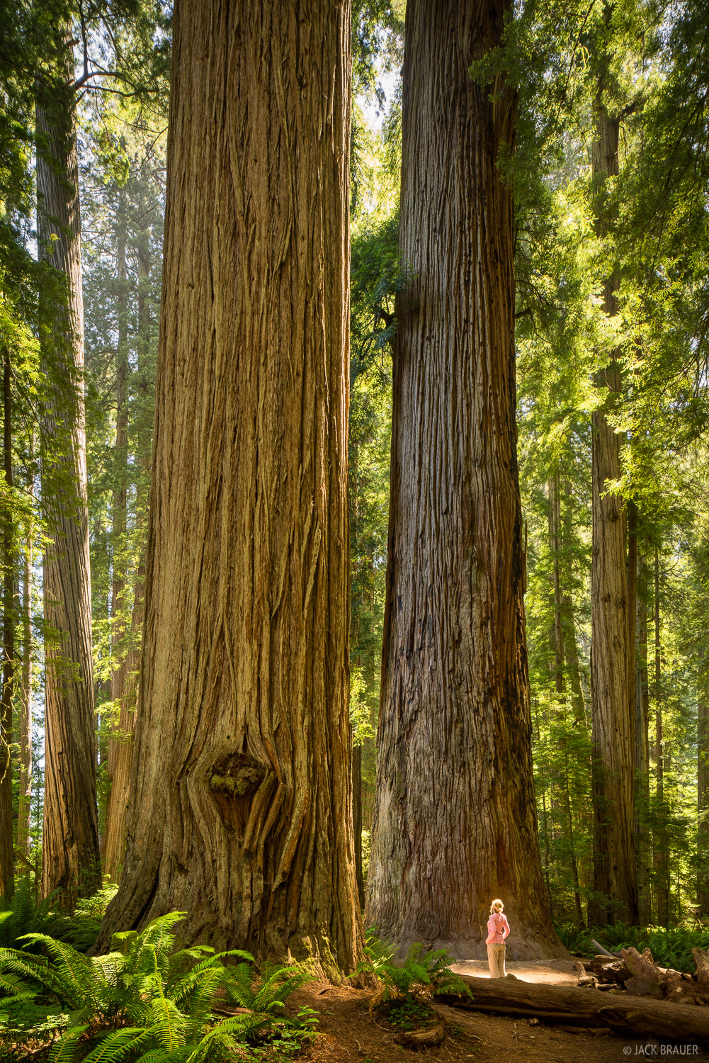 California, Jedidiah Smith Redwoods State Park, Stout Grove, redwoods, photo