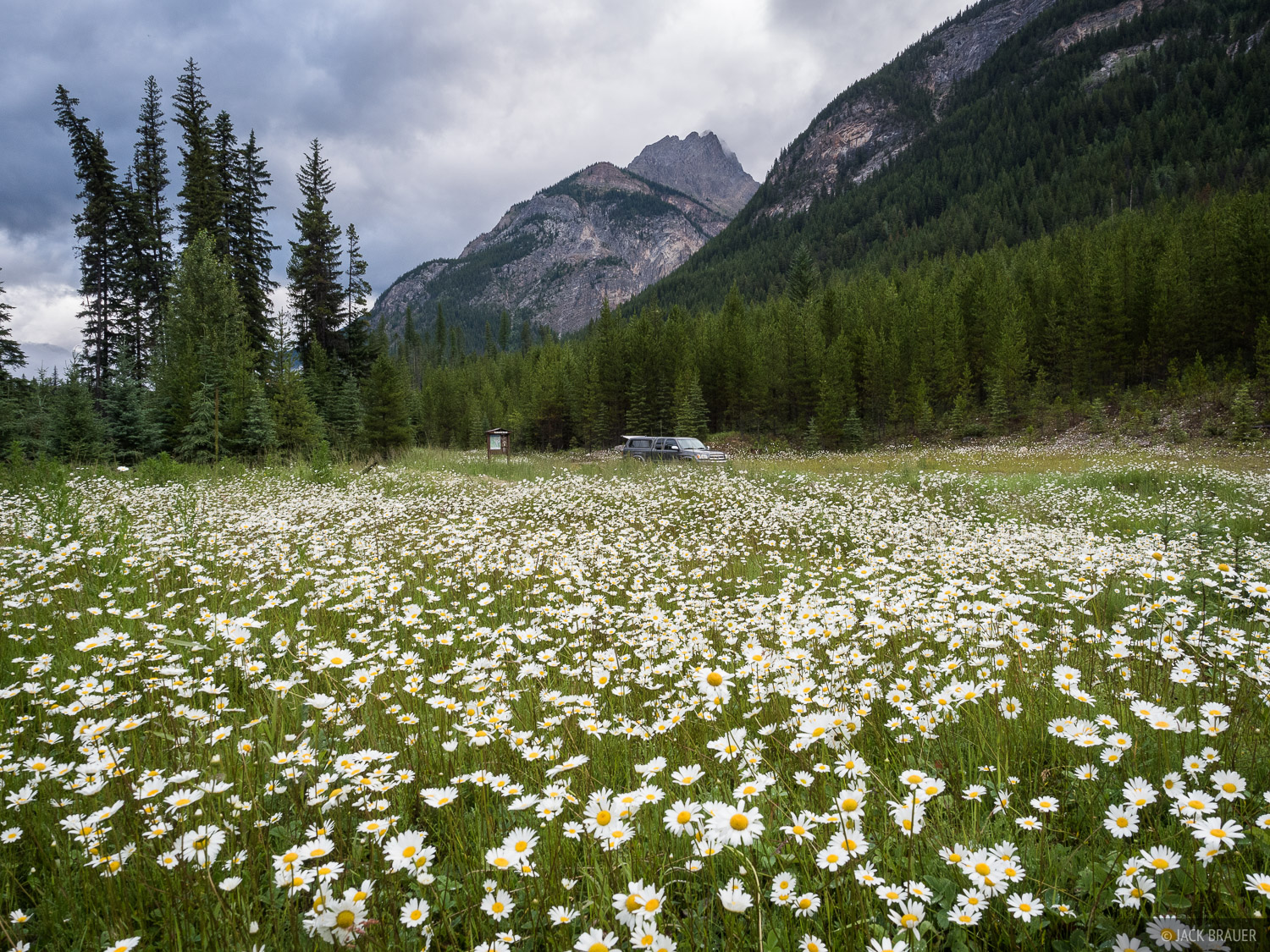 British Columbia, Canada, Height of the Rockies, truck, wildflowers, photo