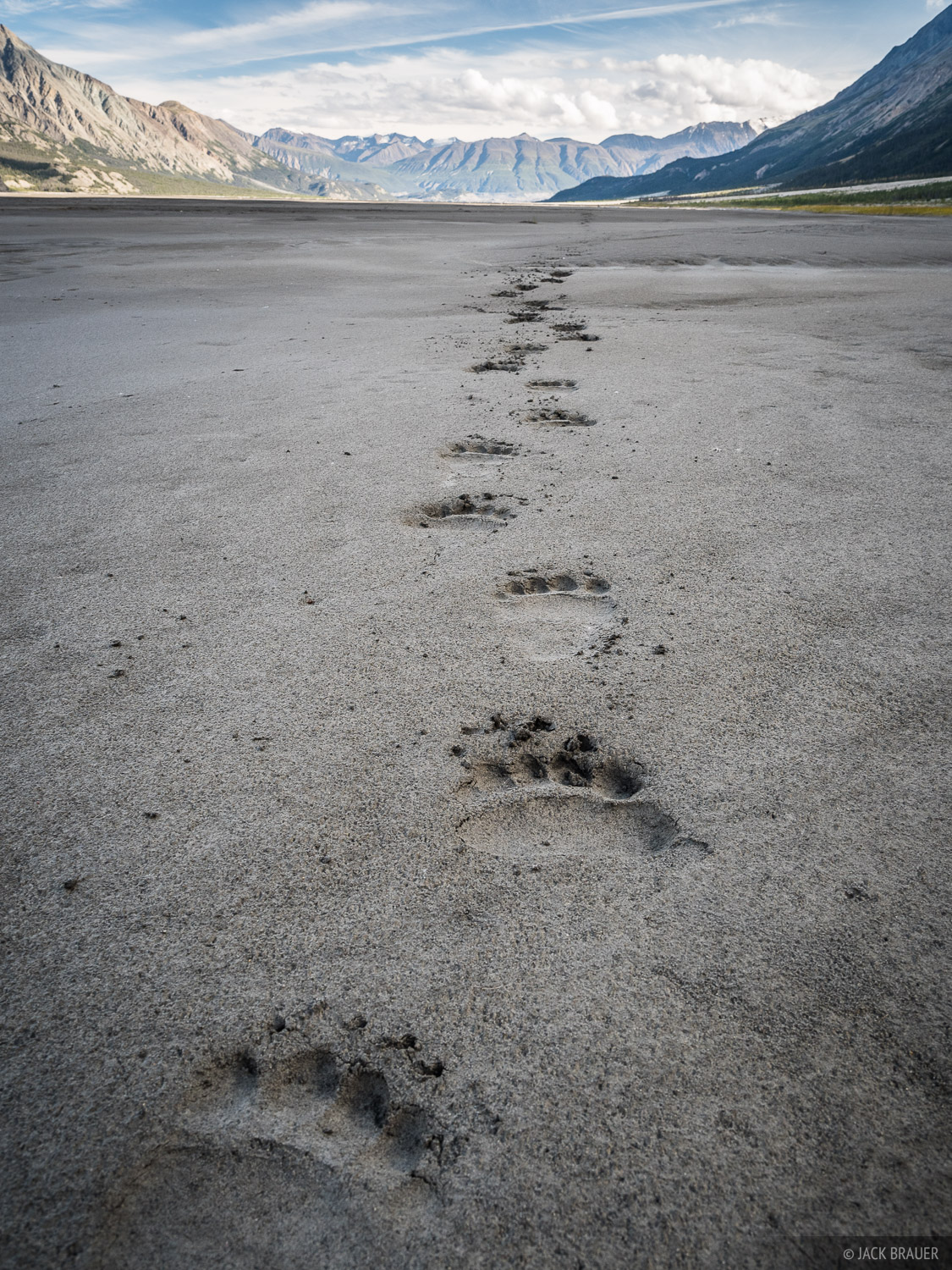Following fresh grizzly bear tracks up the Slims River valley. We saw grizzly tracks all over the place on this trek, but never...