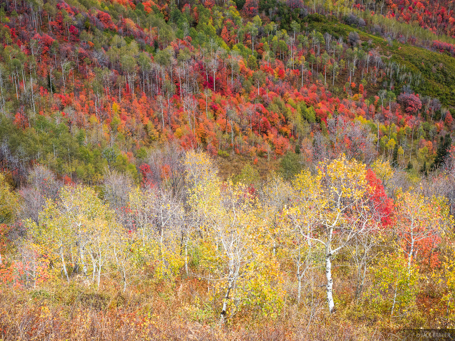 Guardsman Pass, Utah, Wasatch Range, aspens, autumn, photo