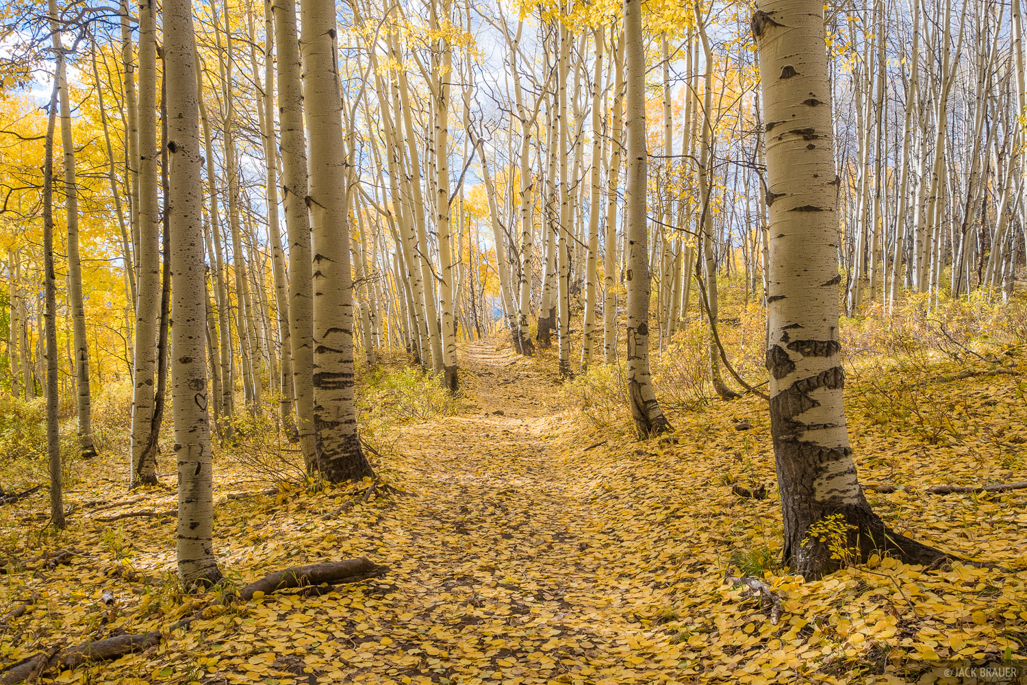 Colorado, Elk Mountains, Kebler Pass, October, aspens, autumn, fall, trail, photo