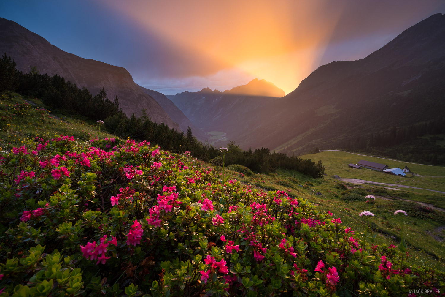 Austria, Karwendel, Karwendeltal, wildflowers, Alps, photo