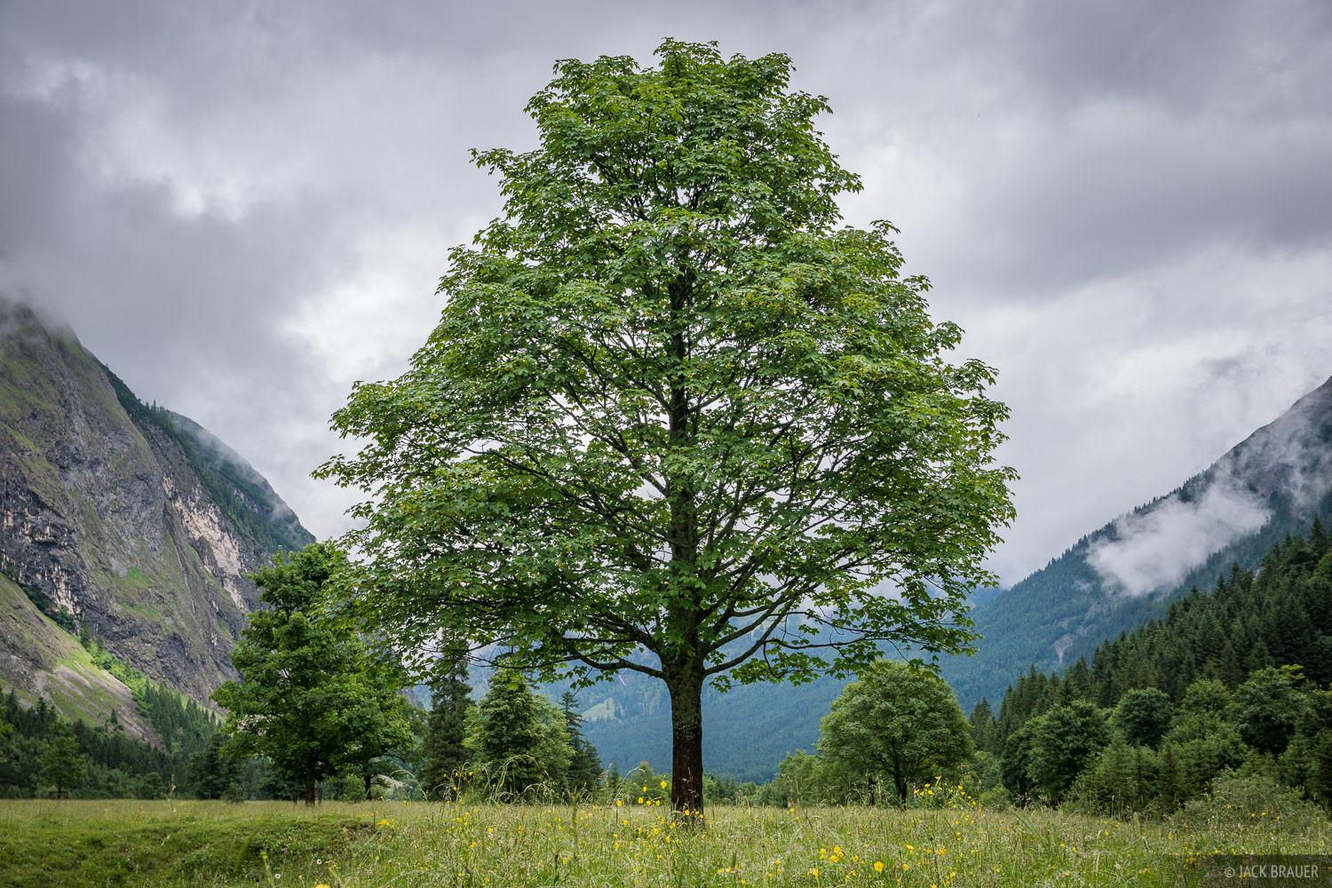Austria, Engalm, Karwendel, Alps, Eng Alm, Engtal, maple tree, tree, photo