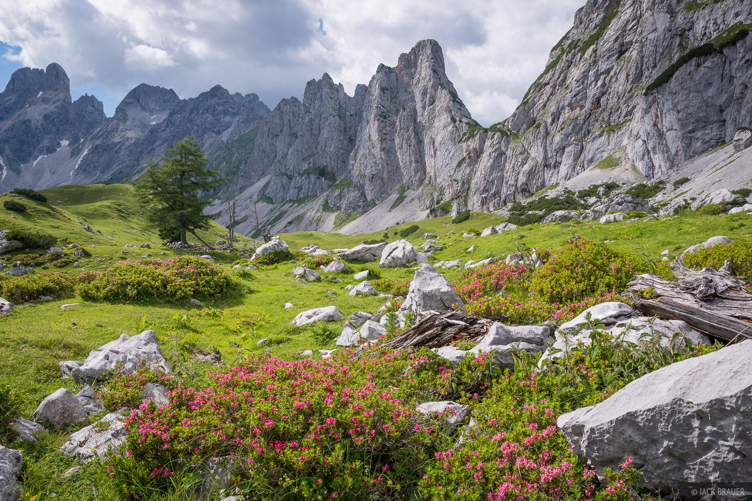 Austria, Dachstein, wildflowers, Alps, photo