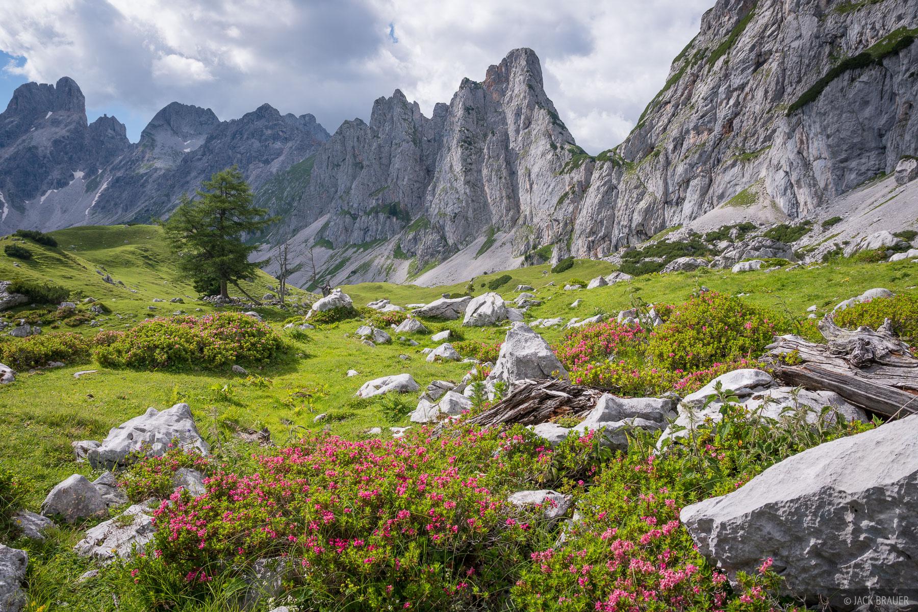 Austria, Dachstein, wildflowers, photo