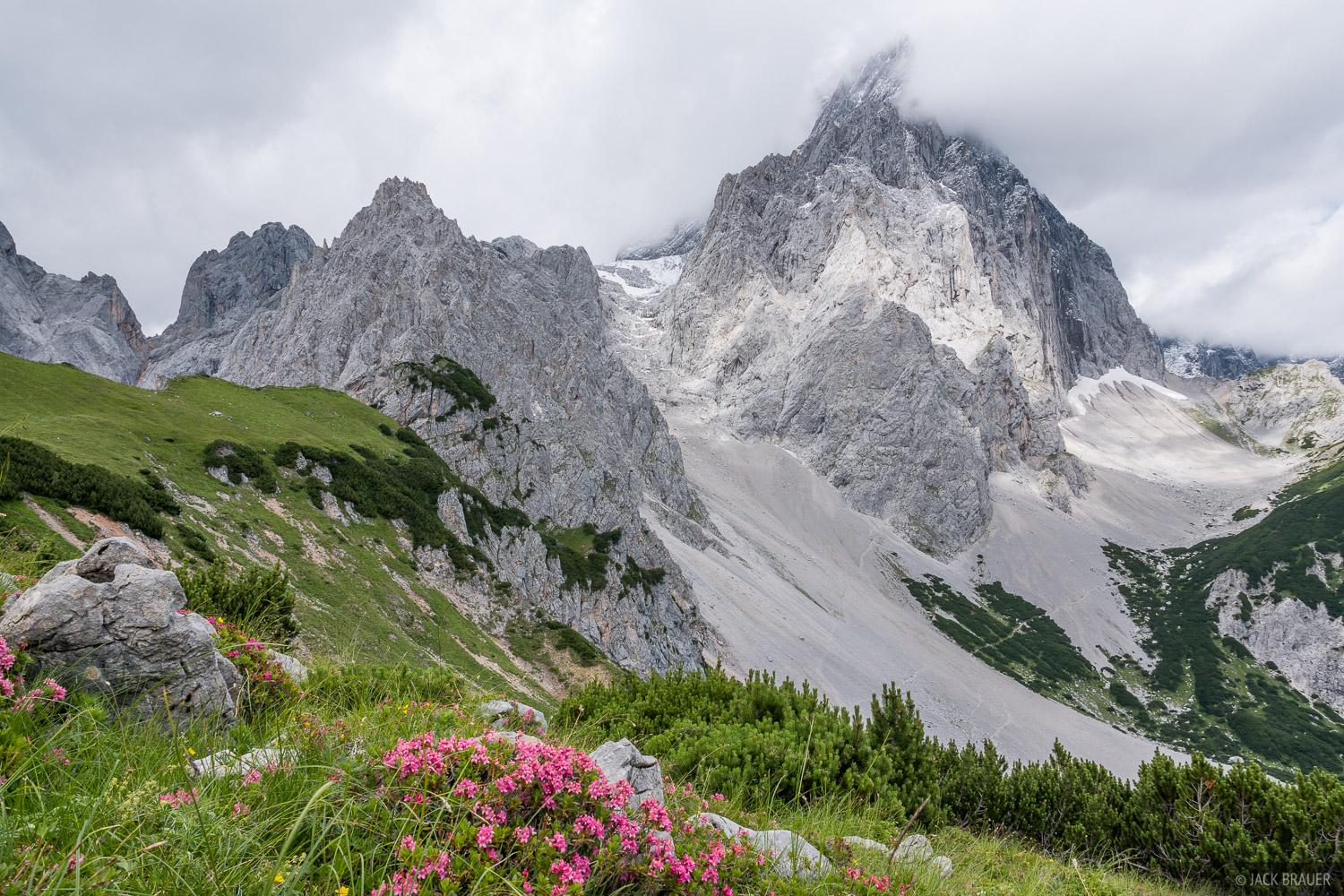 Austria, Dachstein, wildflowers, Torstein, Alps, photo
