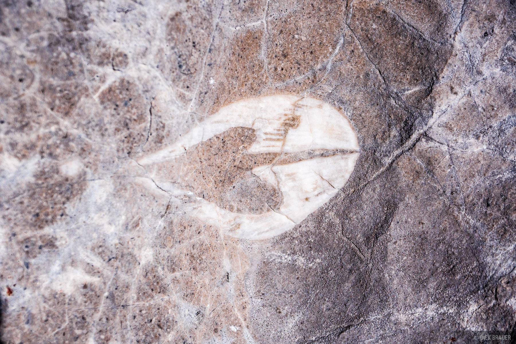 Austria, Dachstein, fossils, photo