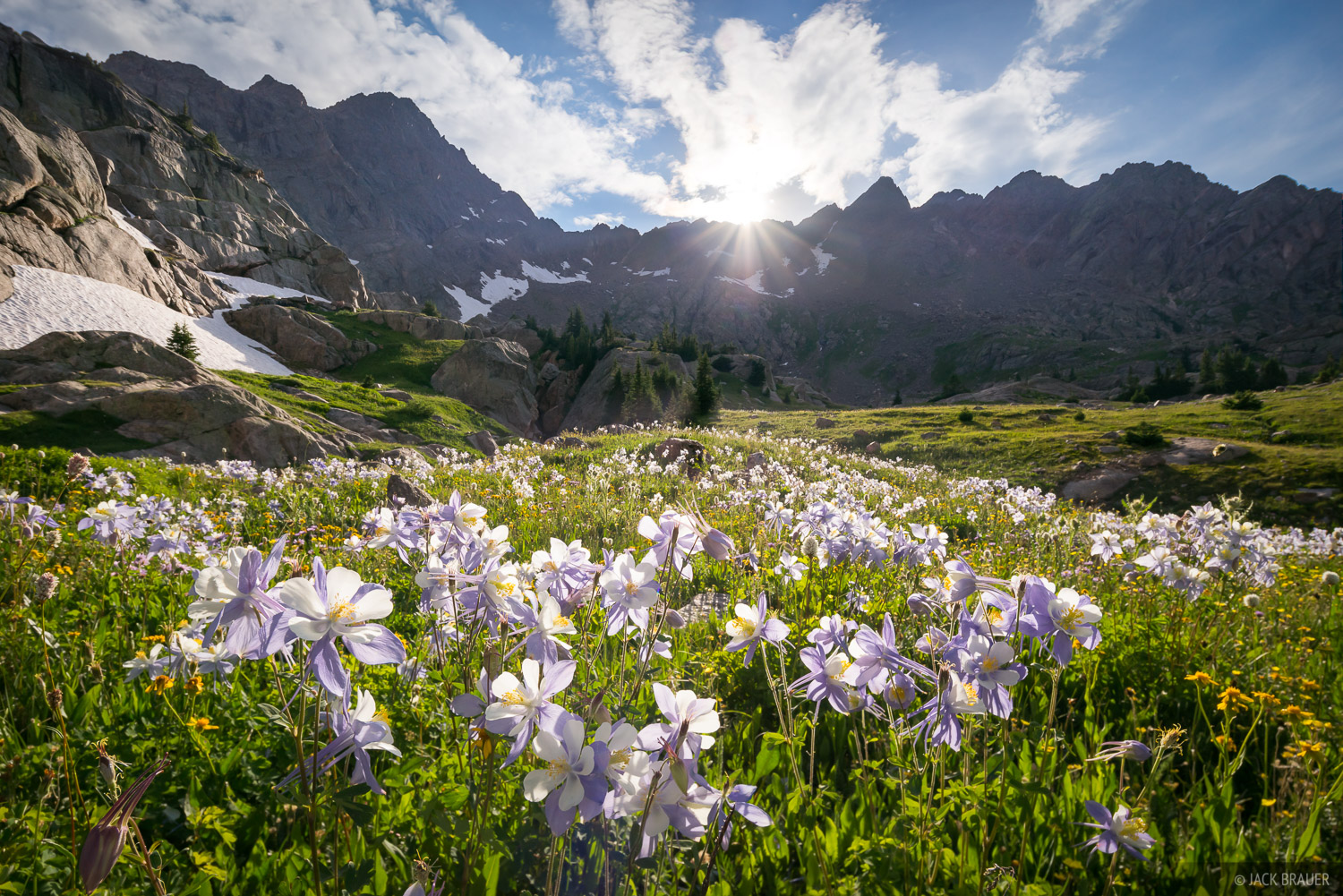 Colorado, Gore Range, columbine, wildflowers, Eagles Nest Wilderness, photo