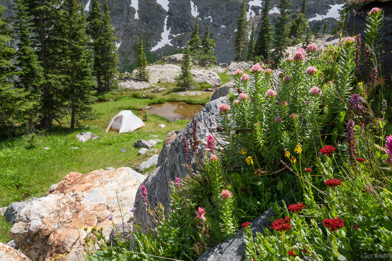 A flower garden above our third night's tent site.