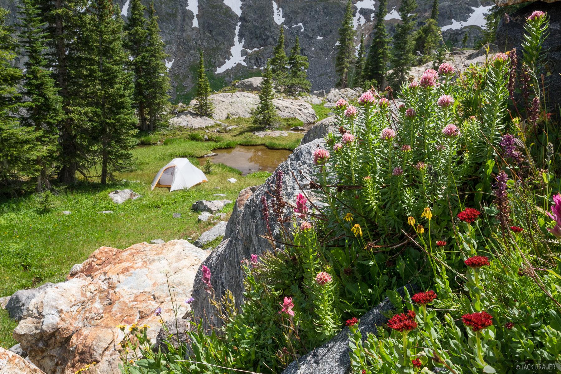 Colorado, Holy Cross Wilderness, tent, wildflowers, Sawatch Range, photo