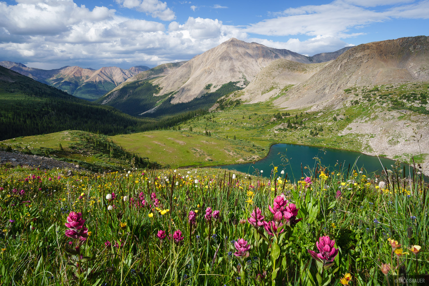Collegiate Peaks Wilderness, Colorado, Huron Peak, Lake Ann, Sawatch Range, wildflowers, photo