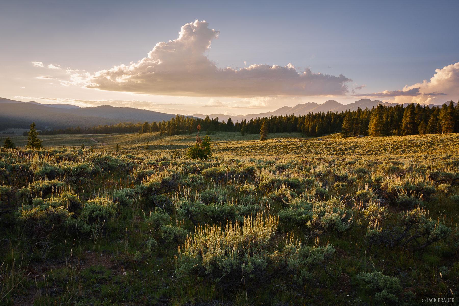 Colorado, Sawatch Range, Taylor Park, sagebrush, photo