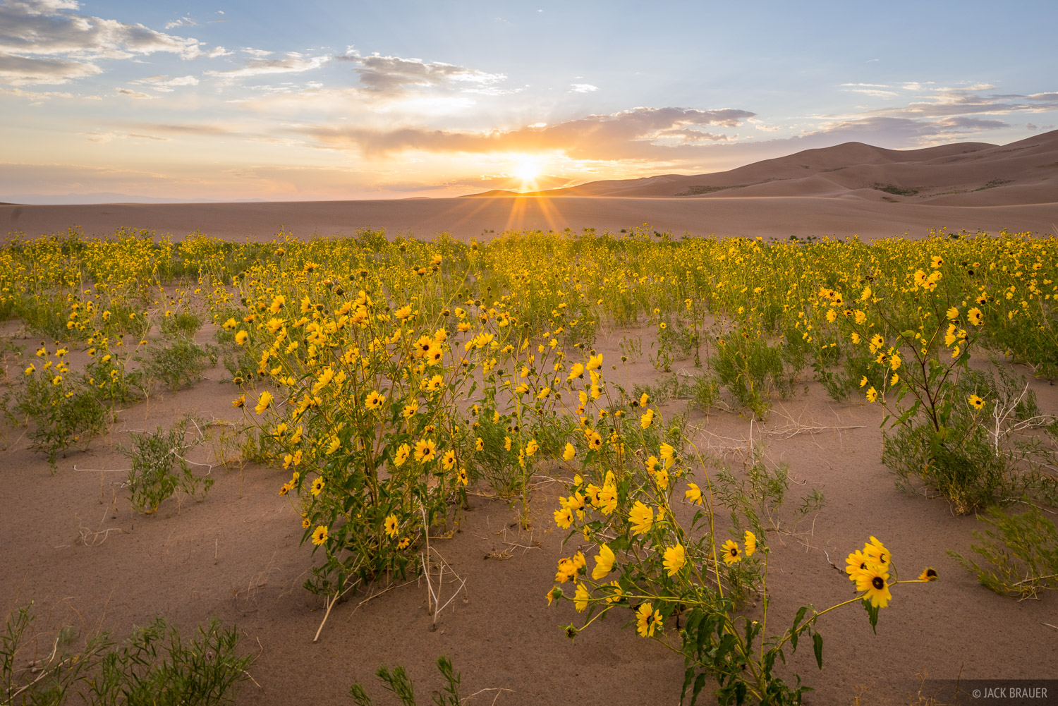 Colorado, Great Sand Dunes, wildflowers, sunflowers, sunset