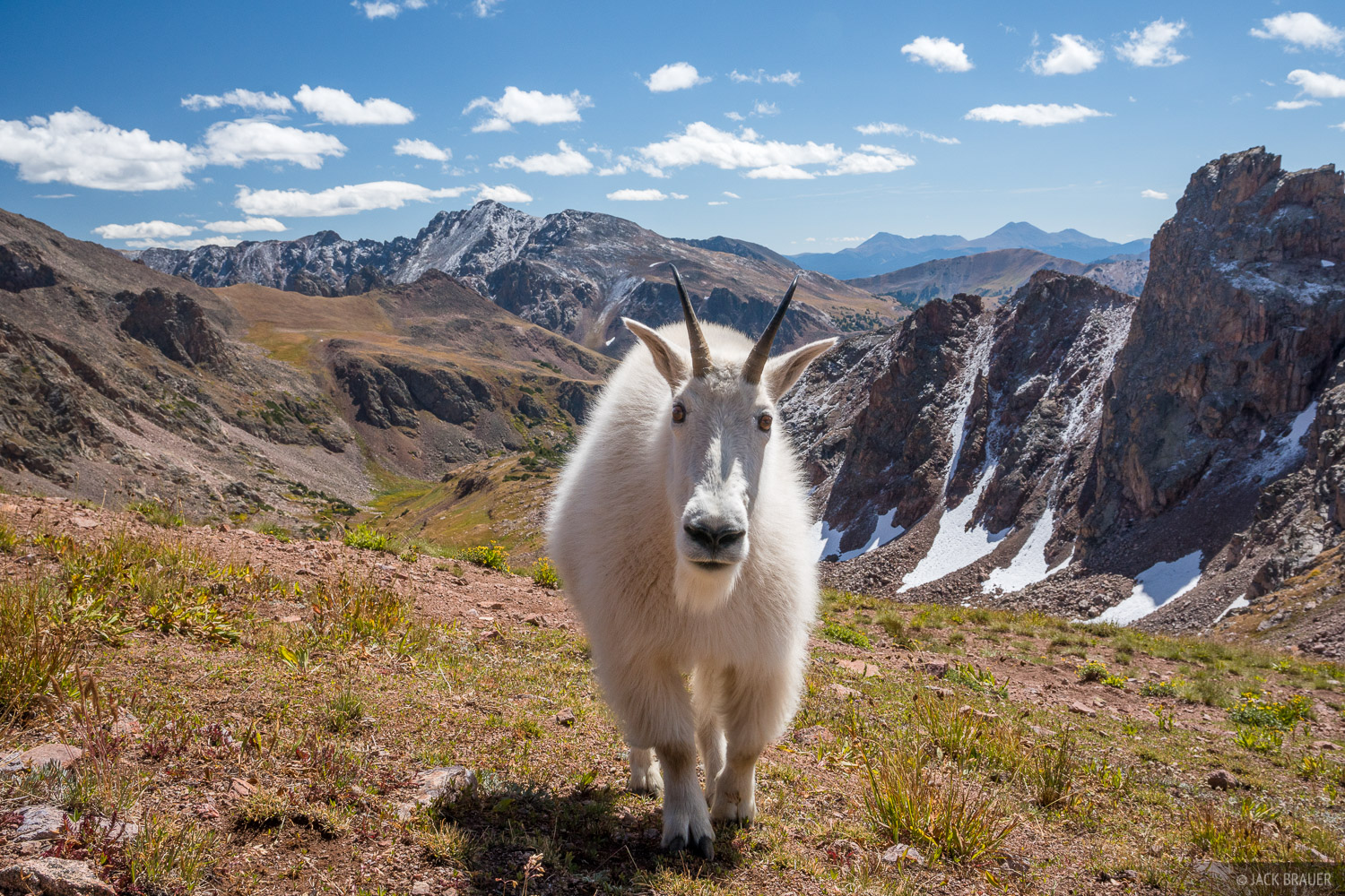 Colorado, Gore Range, mountain goat, Eagles Nest Wilderness, photo