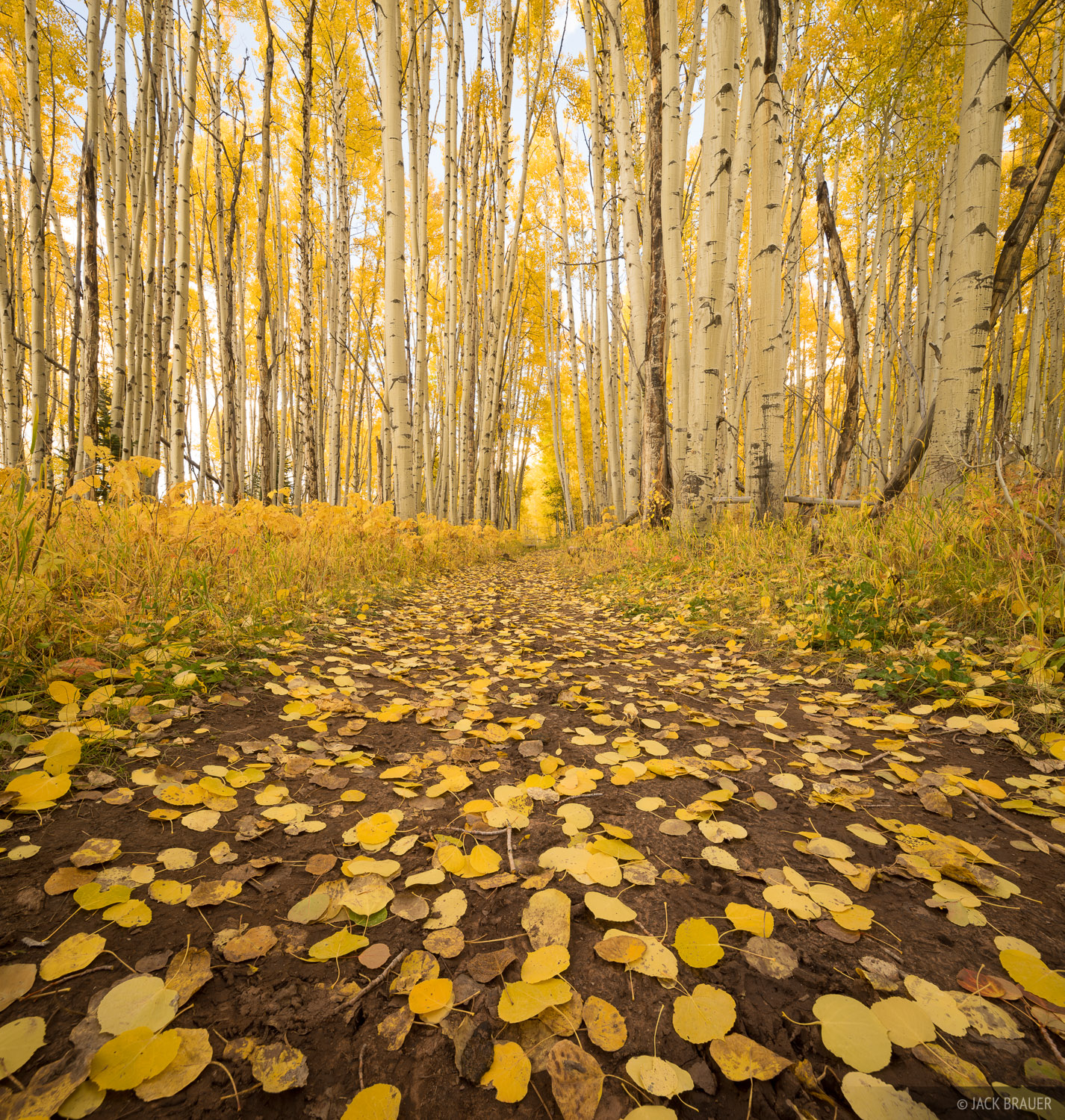 Colorado, Elk Mountains, Kebler Pass, aspens, October, Dark Canyon Trail, photo