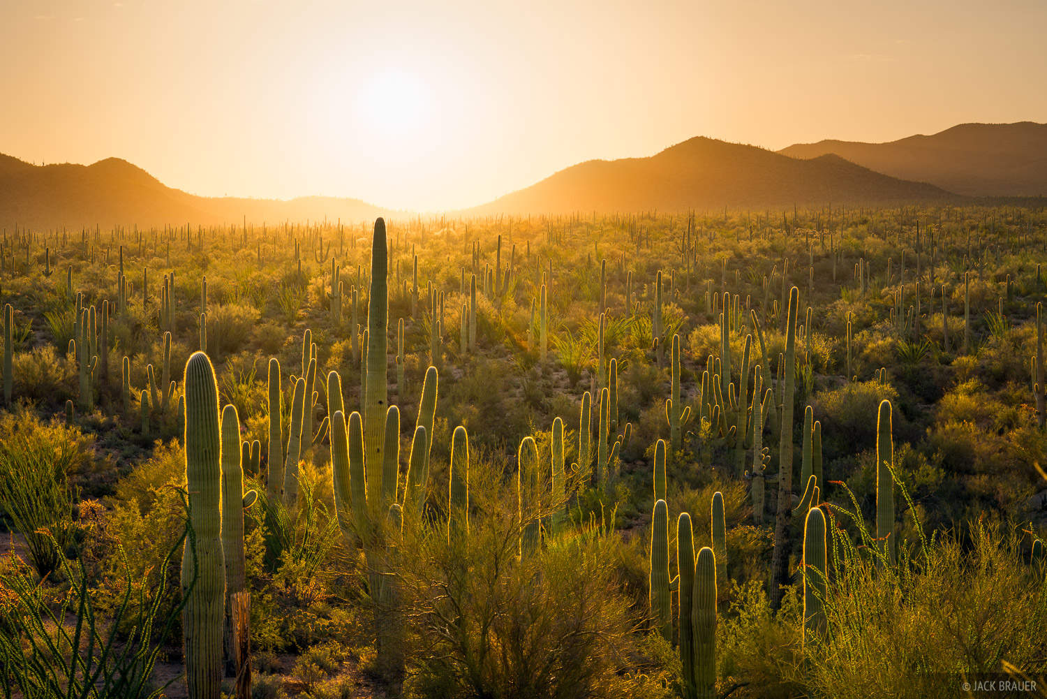 Arizona, Saguaro National Park, photo