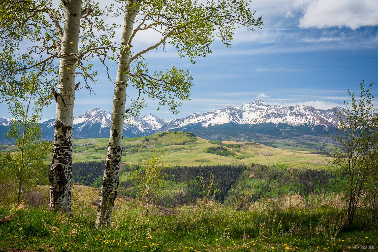 Colorado, San Juan Mountains, 14er, San Miguel Mountains, aspens, Wilson Peak, photo