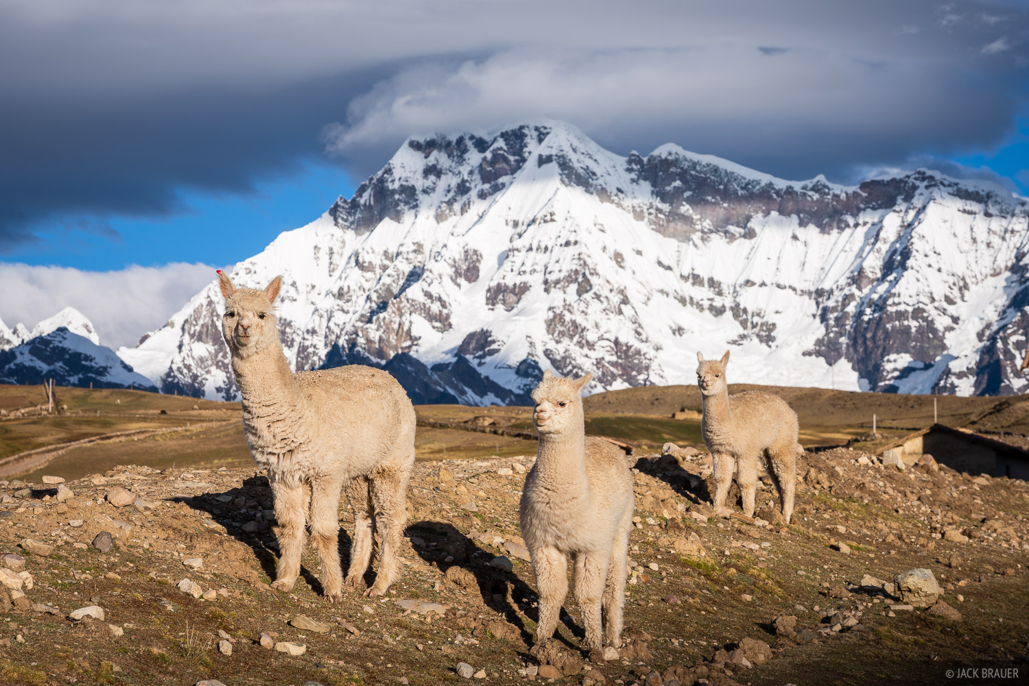 Ausangate, Cordillera Vilcanota, Peru, South America, Upis, alpaca, photo