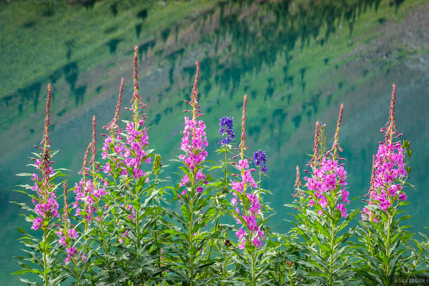 Fireweed wildflowers near an emerald lake.