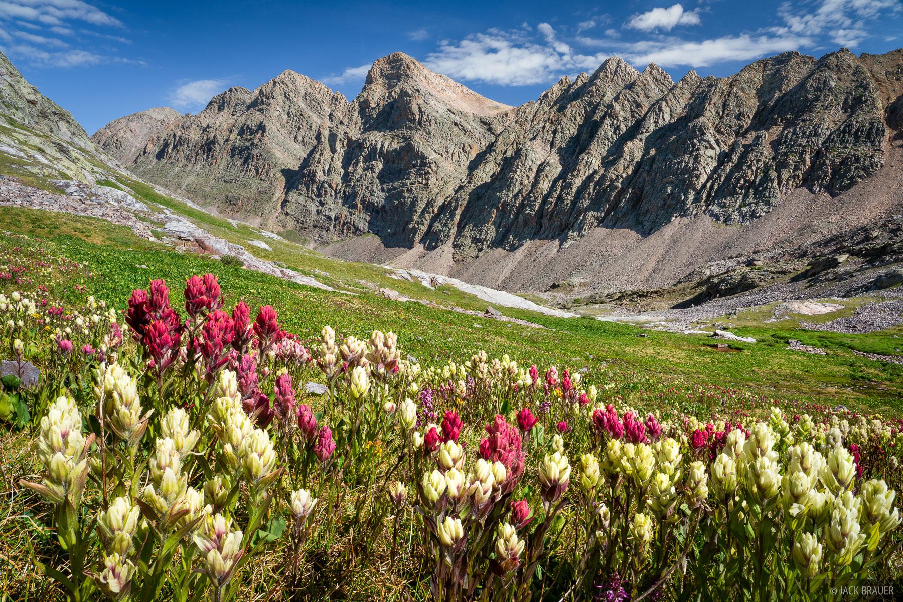 Indian paintbrush wildflowers with Trinity Peaks behind.