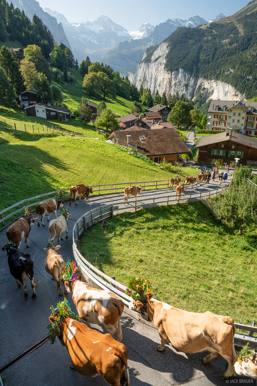Bernese Alps, Lauterbrunnental, Switzerland, Wengen, cows, Bernese Oberland, photo
