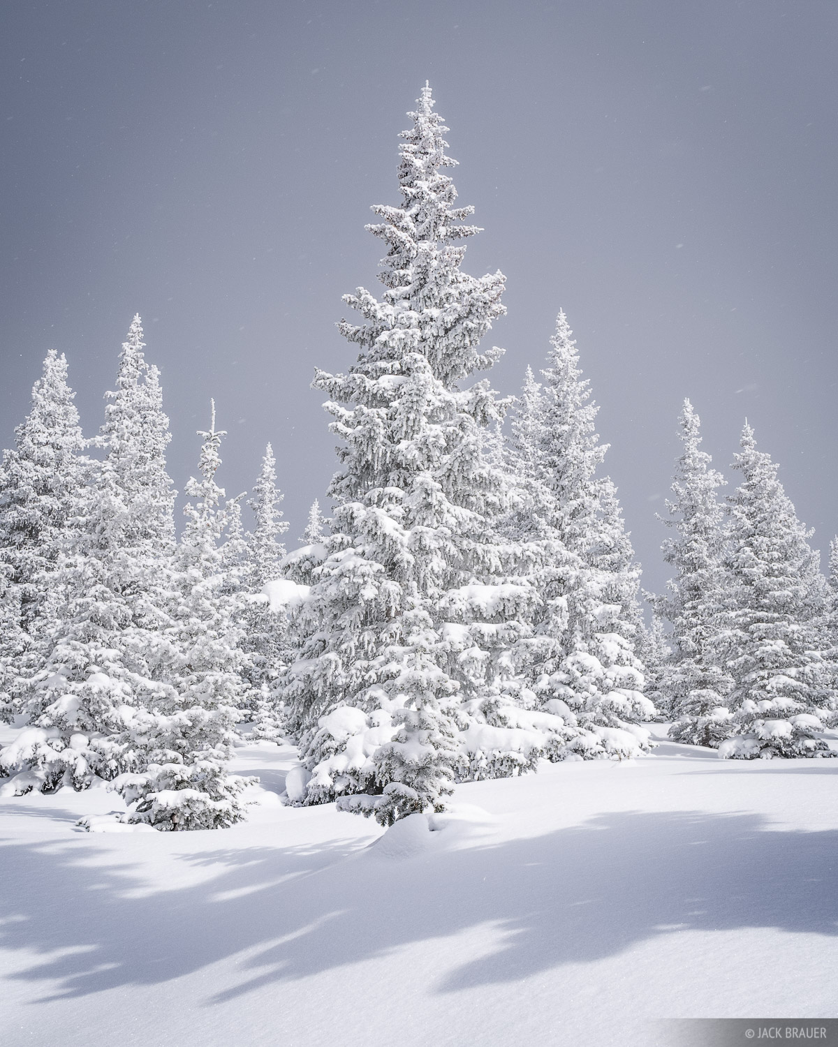 New Mexico, Santa Fe, snow, trees, Sangre de Cristo Mountains, photo