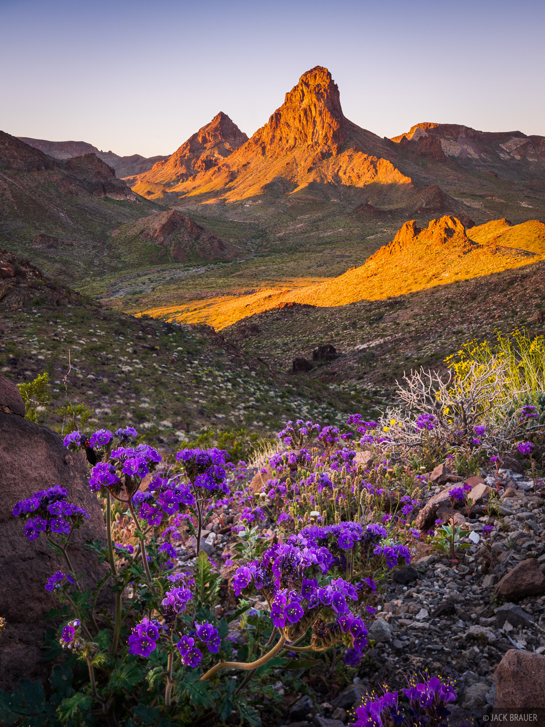California, Mopah Peak, Turtle Mountains, wildflowers, Mojave Desert, photo