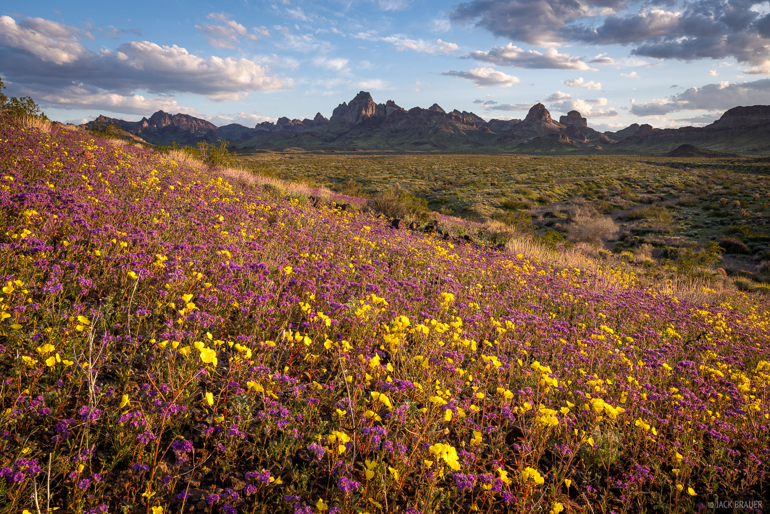 Sunset light on vast fields of wildflowers near the Turtle Mountains.