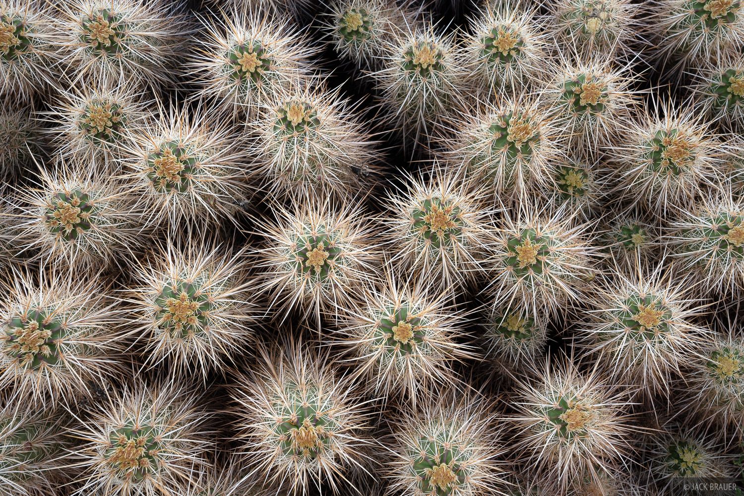 Cacti patterns.
