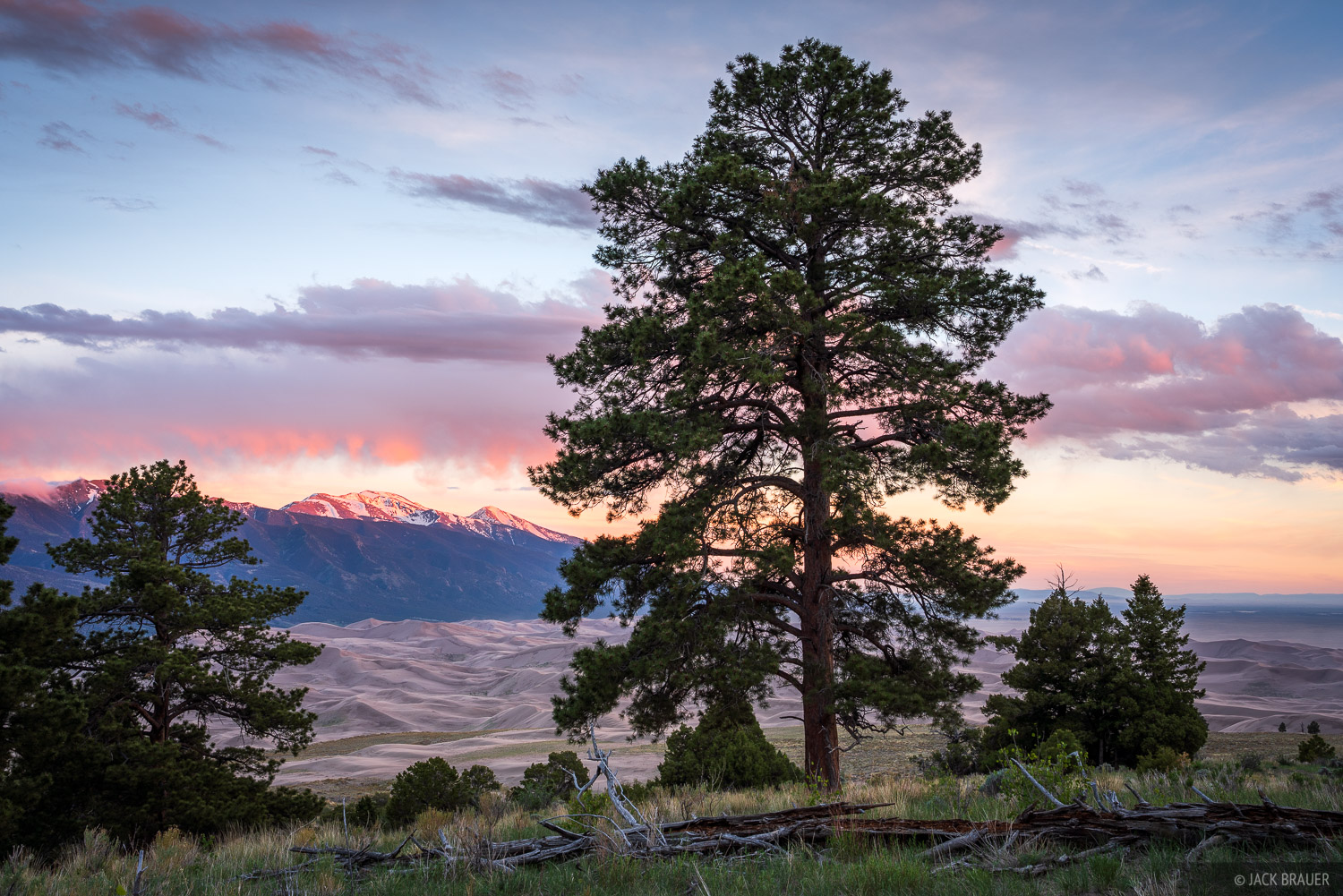 Colorado, Great Sand Dunes, ponderosa pine, sunset, Sangre de Cristos