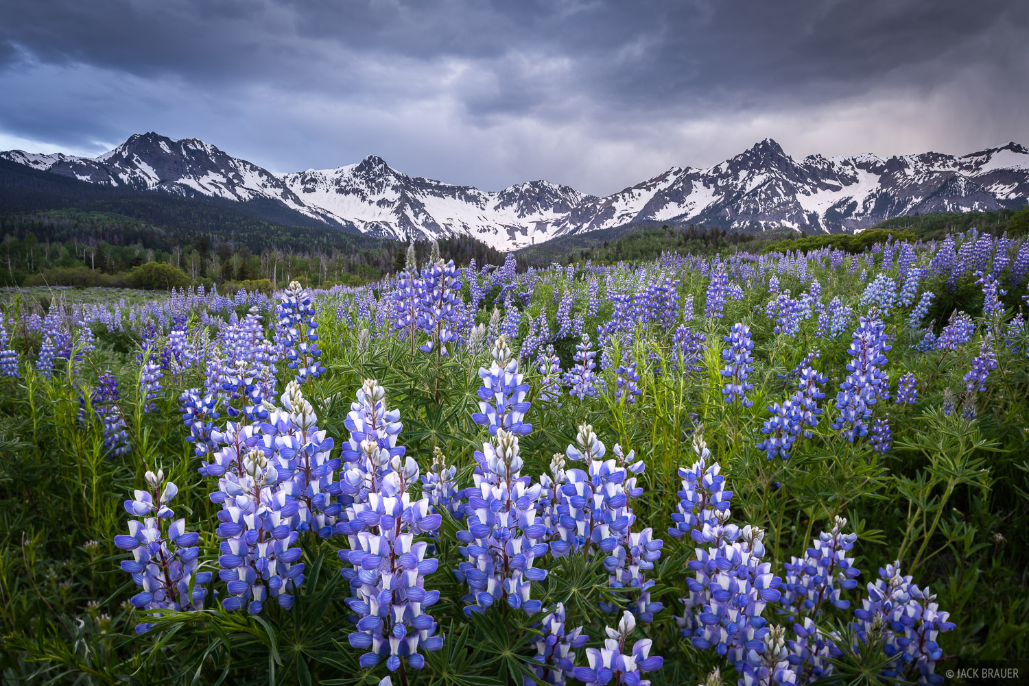 Mears Peak, the Sneffels Range, and a field of lupine wildflowers under a stormy sky in June.