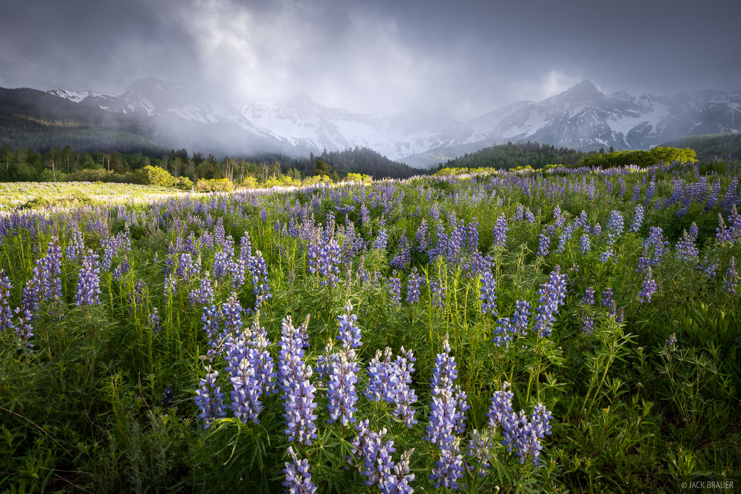 A splash of sunlight beams through over a field of lupines as rain clouds roll over Mears Peak and the Sneffels Range -...