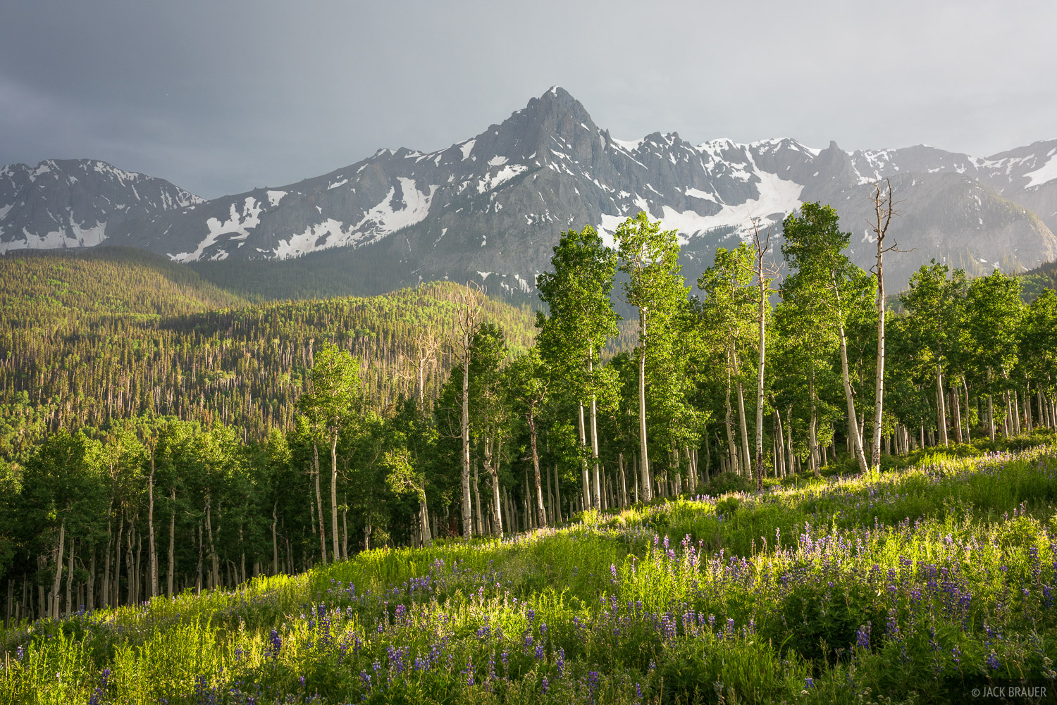 Late afternoon light streams through the aspens and lupine meadows below peak S9 in the Sneffels Range.